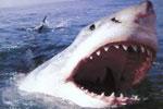 لعبة الحوت الازرق المهاجم